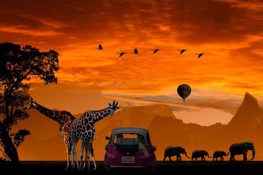 Giraffe Manor honeymoon location