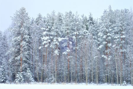 Cold Weather Honeymoon Ideas
