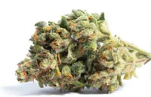 Sativa marijuana strain